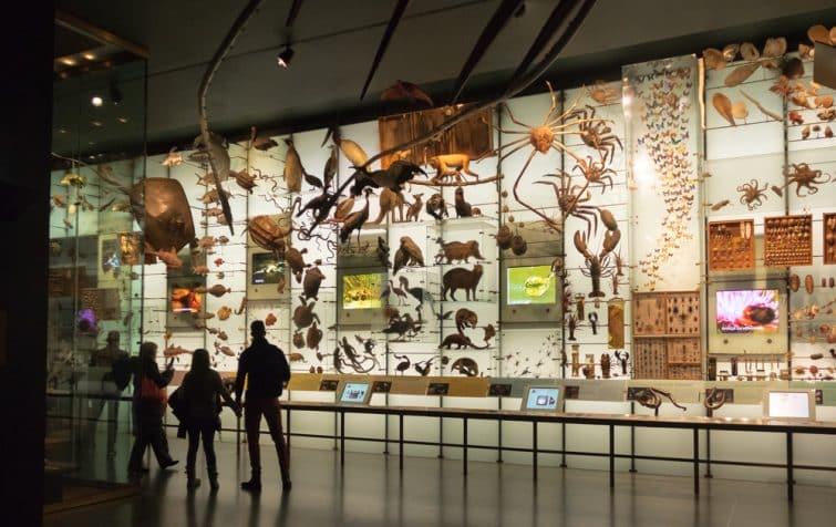 Mur de la biodiversité, Musée d'Histoire Naturelle, New York