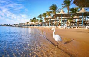 Concept d'un séjour exotique de plage idéal. Egypte Hurghada.