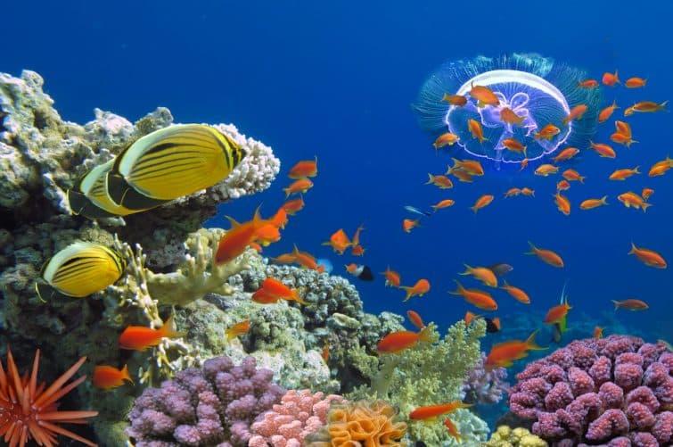 Corail et poissons Egypt