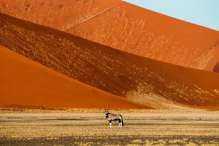 Antilope devant les dunes du désert de Namib Naukluft