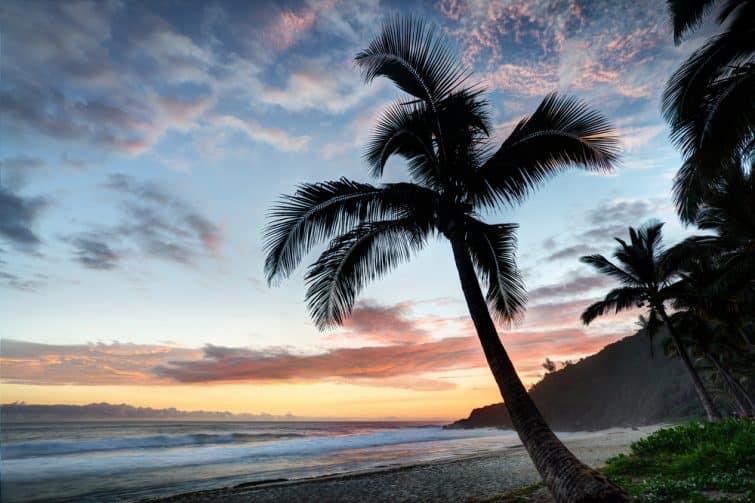 Palmier sur la plage au coucher du soleil. Île Reunion