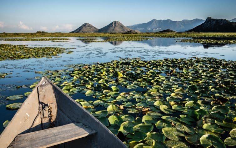 Un bateau en bois dans les nénuphars sur le lac de Skadar