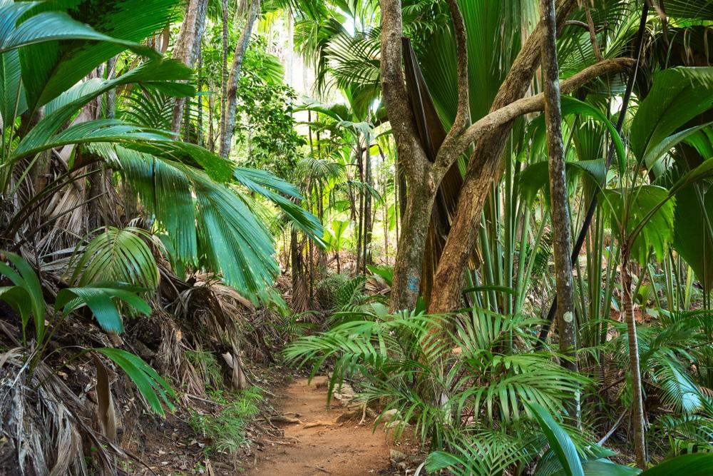 Vallée de Mai, île de Praslin,