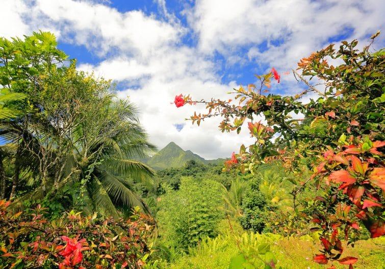 Volcan des montagnes chaudes, Martinique, Caraïbes. Végétation luxuriante au premier plan