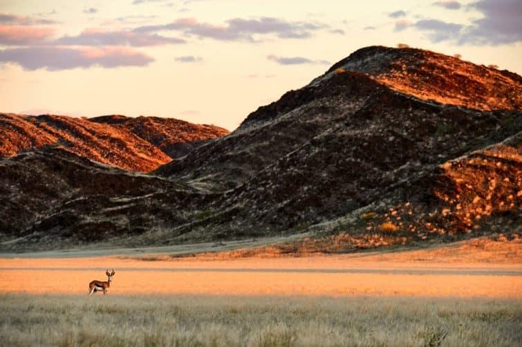 Antilope au loin, coucher de soleil à Damaraland, Namibie