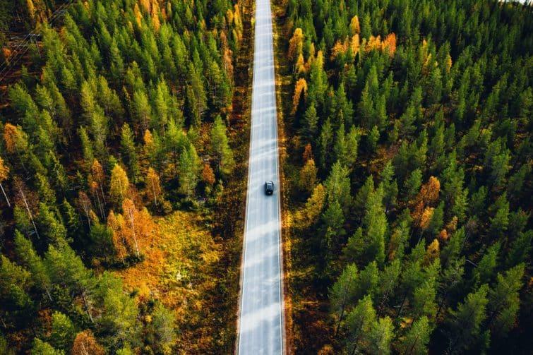 Route finlandaise au milieu des sapins