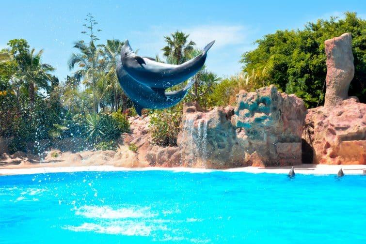 Spectacle de dauphins à Loro Parque, Tenerife