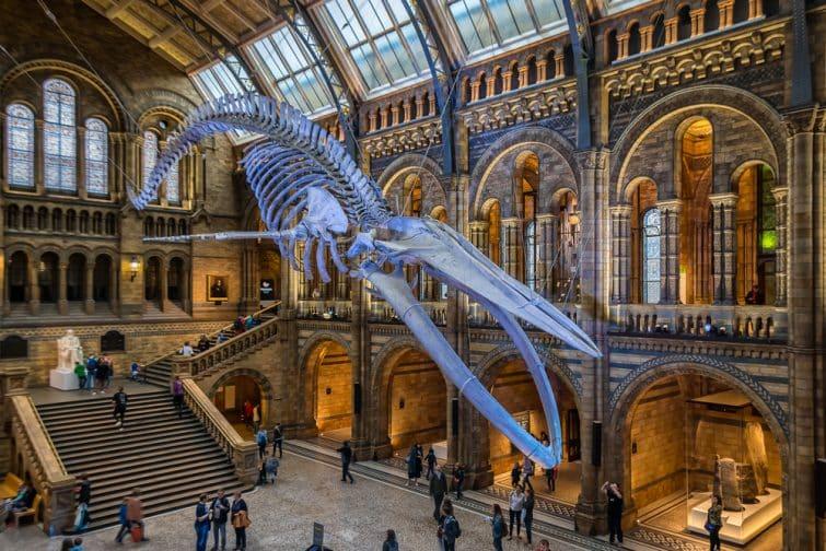 Le Musée d'Histoire Naturelle de Londres