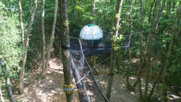nid arbre maison