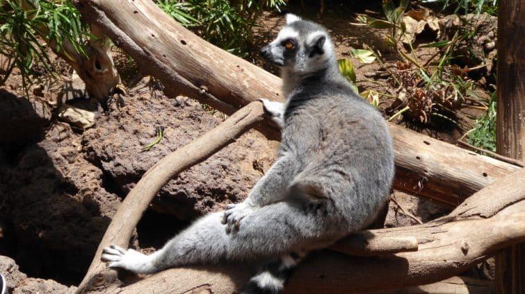 Visiter l'Oasis Park et découvrez les nombreux animaux du parc