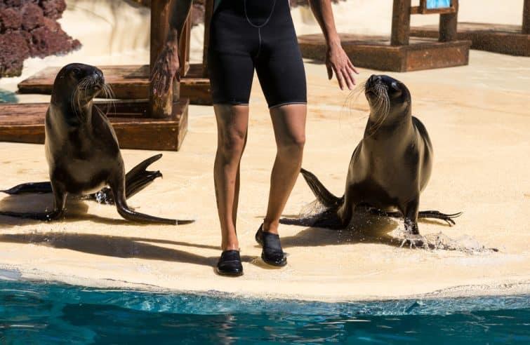 Grâce à vos billets pour l'Oasis Park, assistez aux spectacles d'animaux