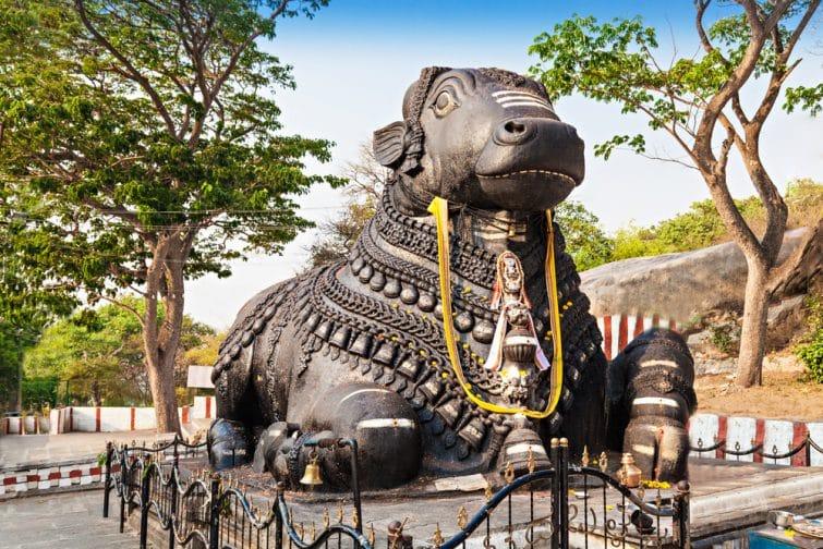 temple Bull