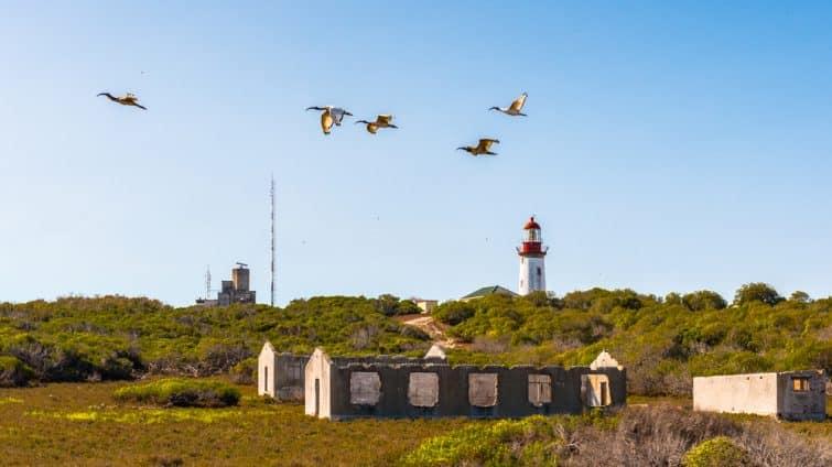 L'île de Robben, une île de Table Bay, à l'ouest de la côte de Bloubergstrand, au Cap, en Afrique du Sud.