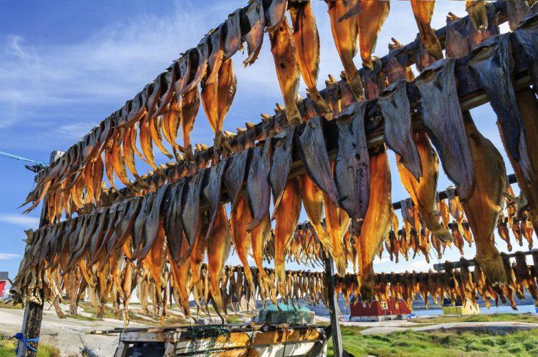 Le poisson séché dans la colonie de Rodebay, au Groenland