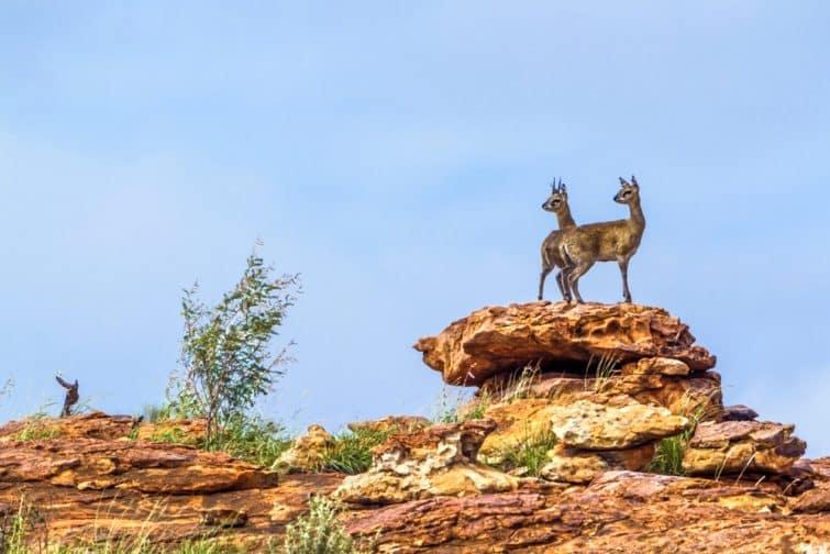 Safaris à faire en Afrique du Sud : Mapungubwe