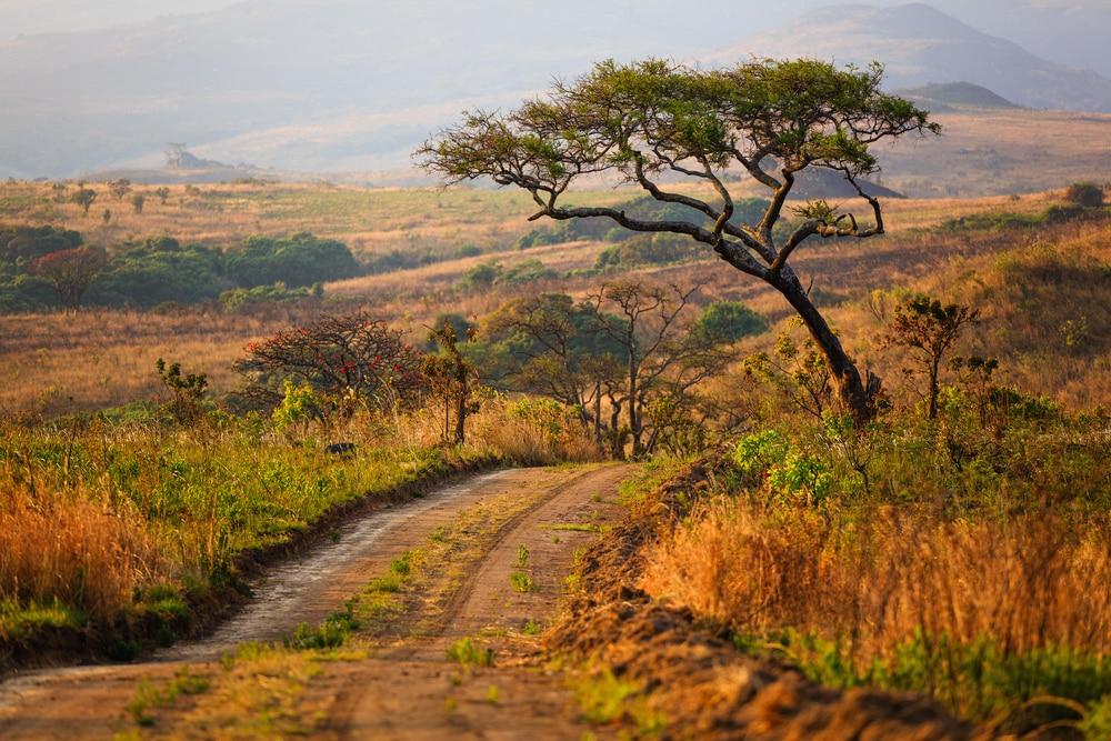 Paysage du parc national de Nyika - Malawi