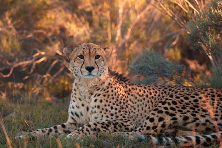 Safaris à faire en Afrique du Sud : Shamwari
