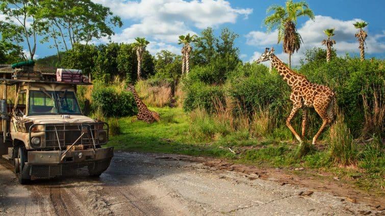 Attraction safari, Animal Kingdom, Disney Orlando