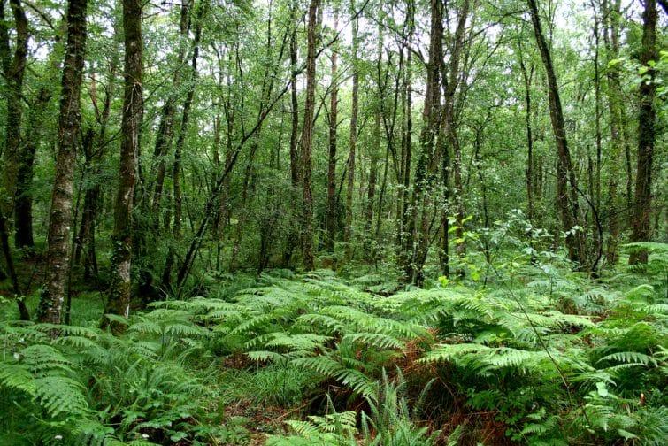 Forêt de Paimpont, aussi appelée Forêt de Brocéliande