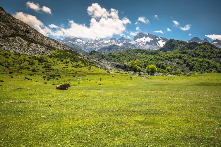 Picos de Europa, Espagne