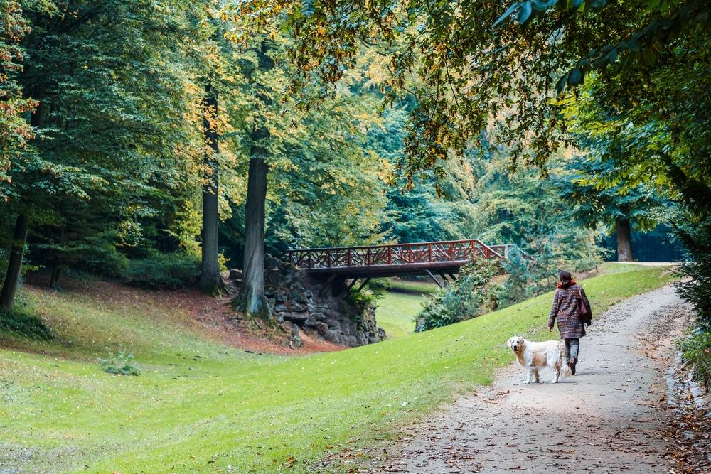 Visiter Bruxelles et le Bois de la Cambre, idéal pour les canins
