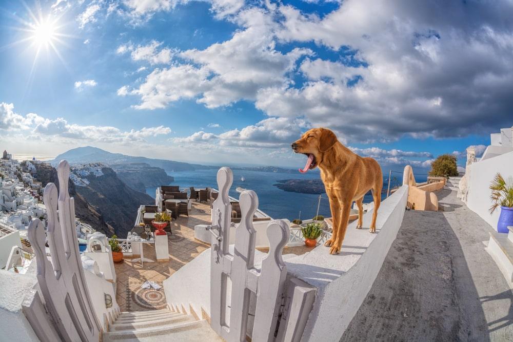 Voyager avec son chien, en Grèce