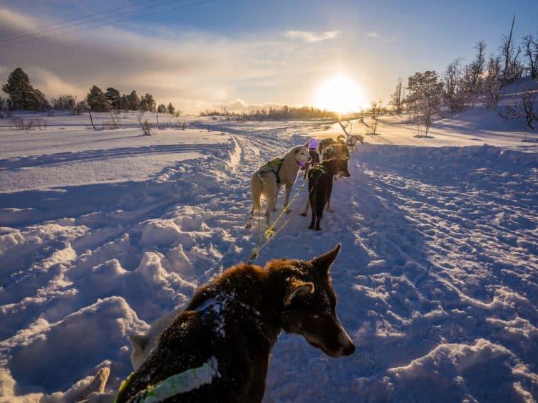 Admirer le coucher du soleil, en chien de traîneau