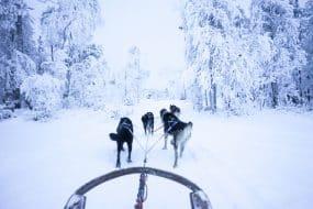 Faire du chien de traîneau à Tromsø