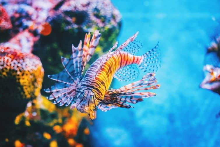 La chasse au lion parmi les récifs coralliens, Sea Life Ocean World, Bangkok