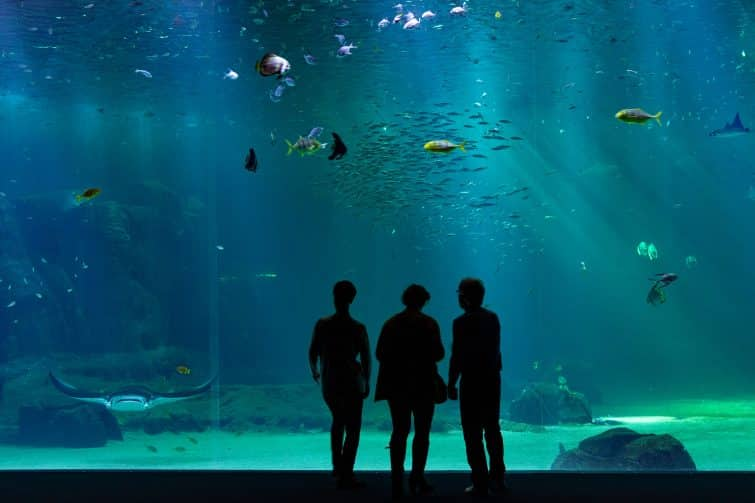 Admirer les poissons, à Nausicaa