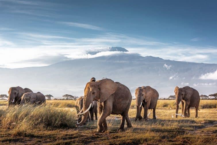 Eléphants dans le parc d'Amboseli, Kenya