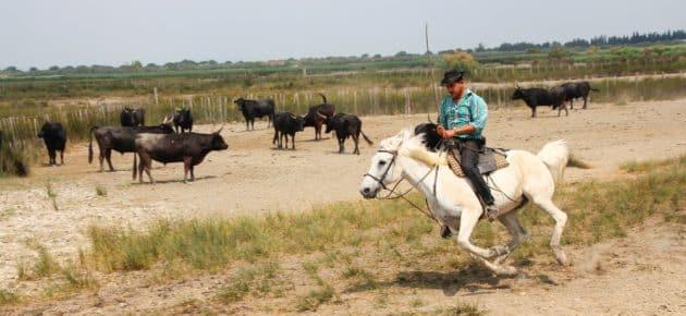 Les 12 choses incontournables à faire en Petite Camargue
