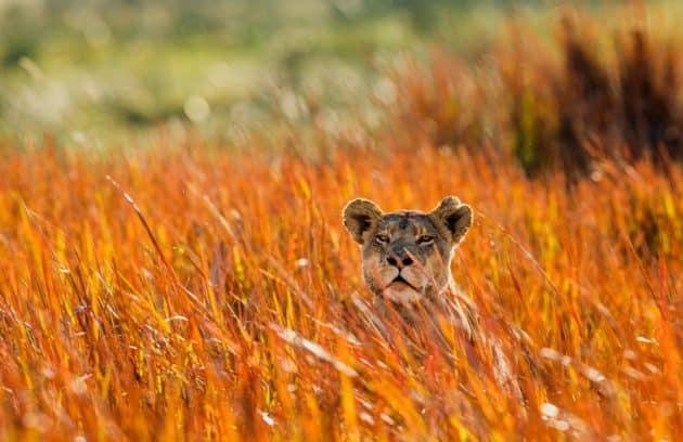 Les 7 meilleurs safaris à faire en Zambie