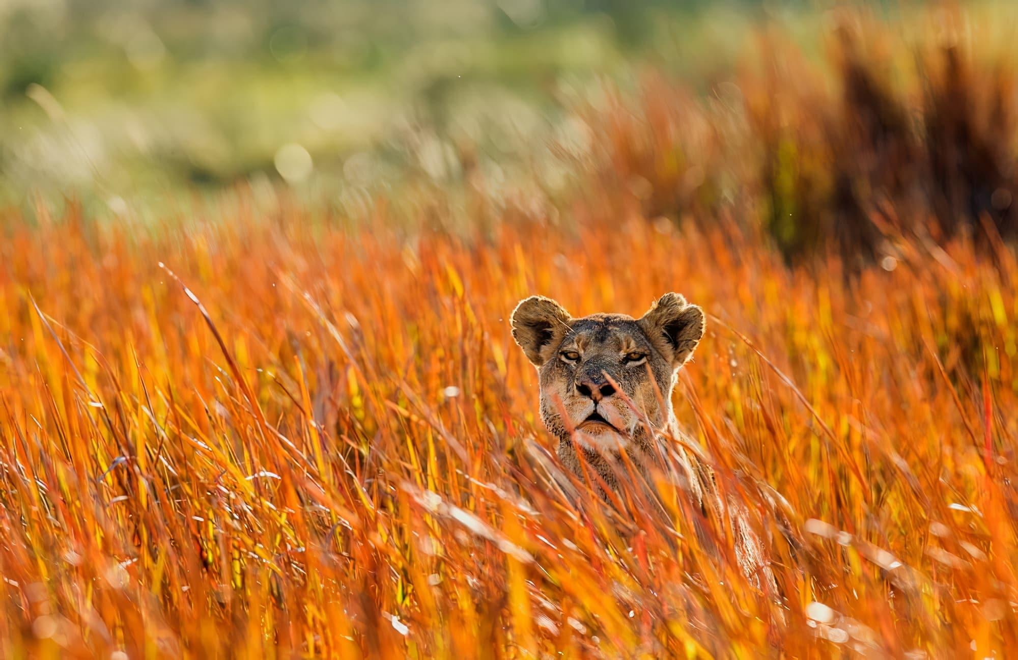 Les meilleurs safaris à faire en Zambie