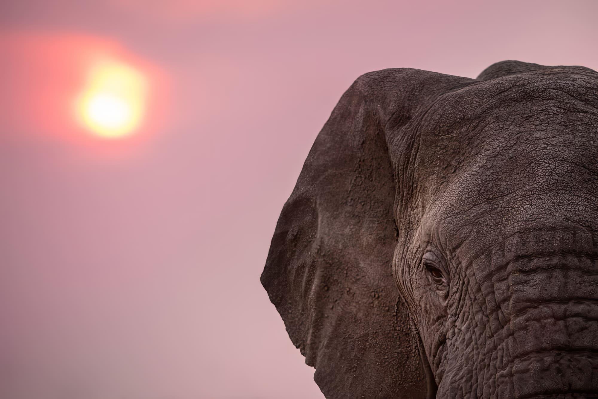 Safaris à faire en Afrique du Sud