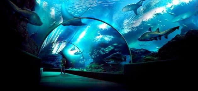 Visiter Sea Life Ocean World à Bangkok : billets, tarifs, horaires