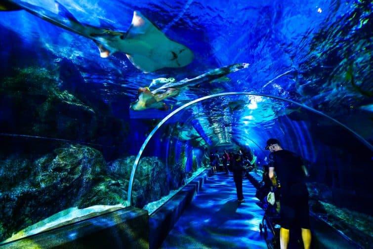 Visiter Sea Life Ocean World, Bangkok