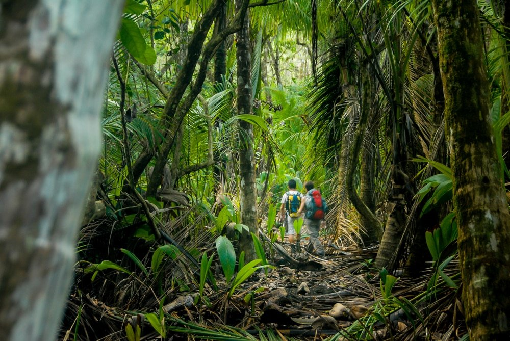 Two hikers walk through the thick jungle of Corcovado National Park