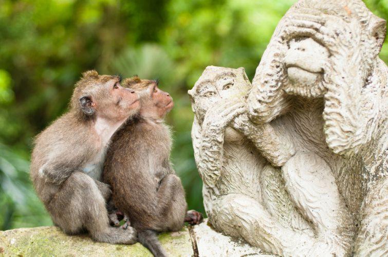 Macaques à queue longue (Macaca fascicularis) dans la forêt du singe sacré, Ubud, Indonésie