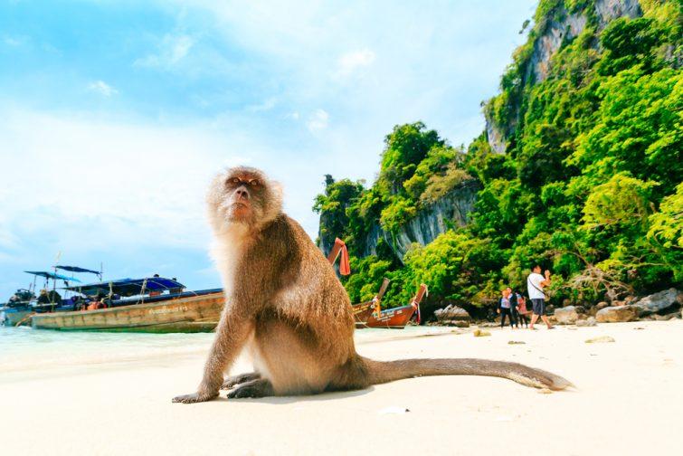 Monkey Beach, îles Phi Phi, Thaïlande
