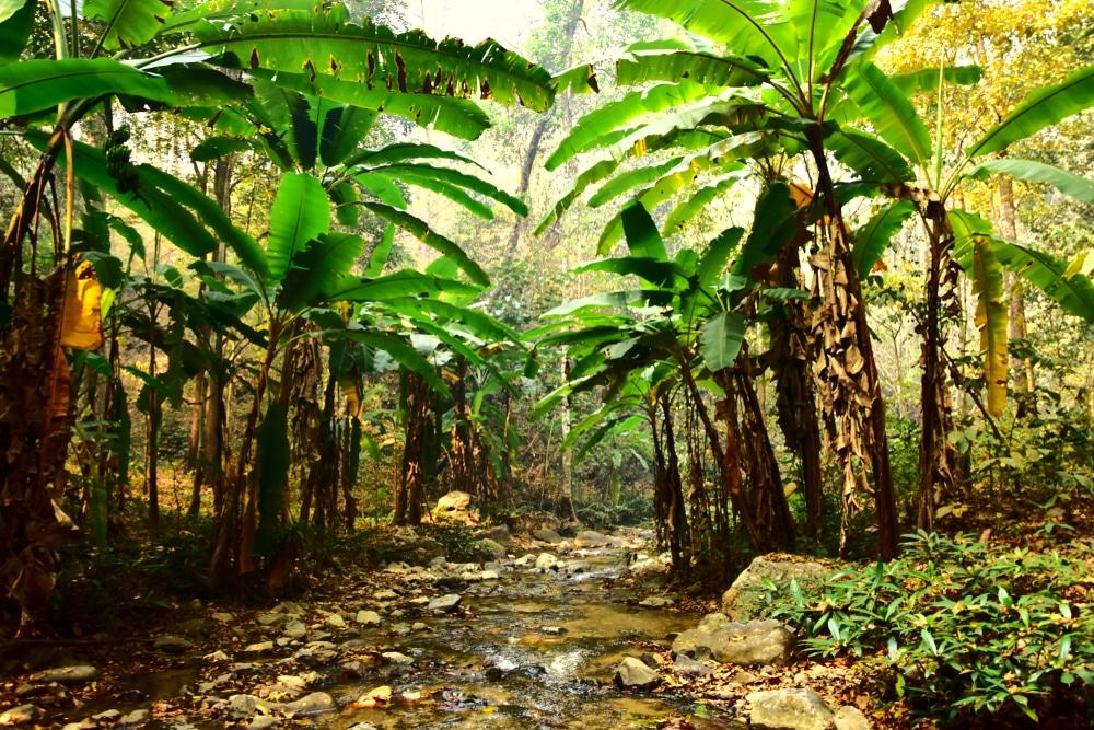 Path to the Mae Yen Waterfall, Pai