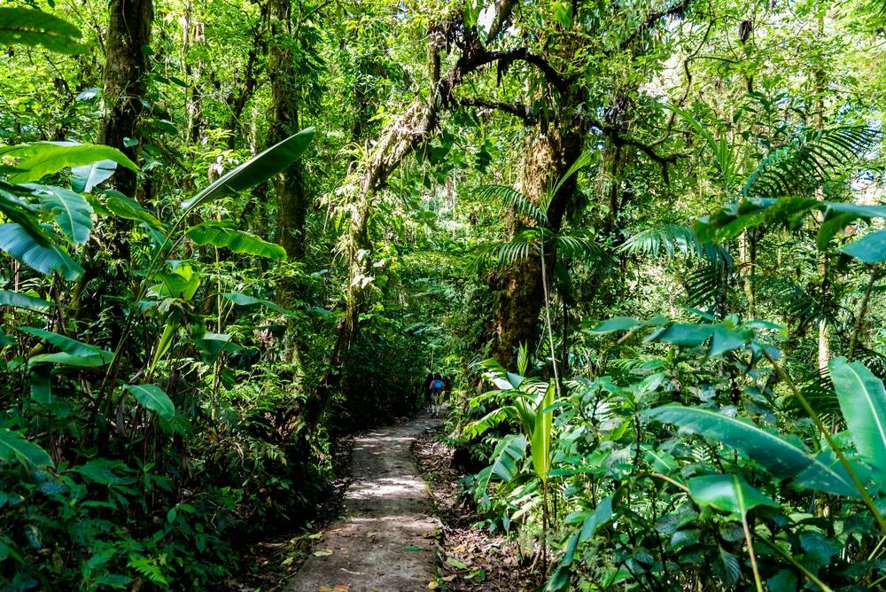 Trail in Cloudforest forest in Costa Rica, Monteverde hiking in Costa Rica