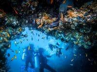 Plongée sous-marine. Un plongeur qui explore la vie des récifs coralliens. Plongée ensemble