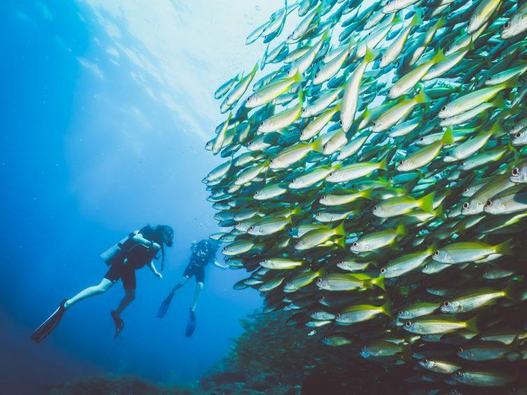 Plongeurs avec une école de poissons, îles Phi Phi, Thaïlande.