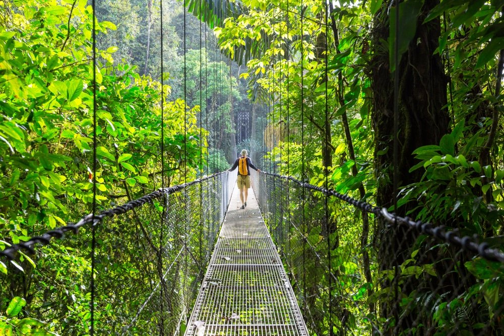 Randonnée dans la jungle tropicale verte