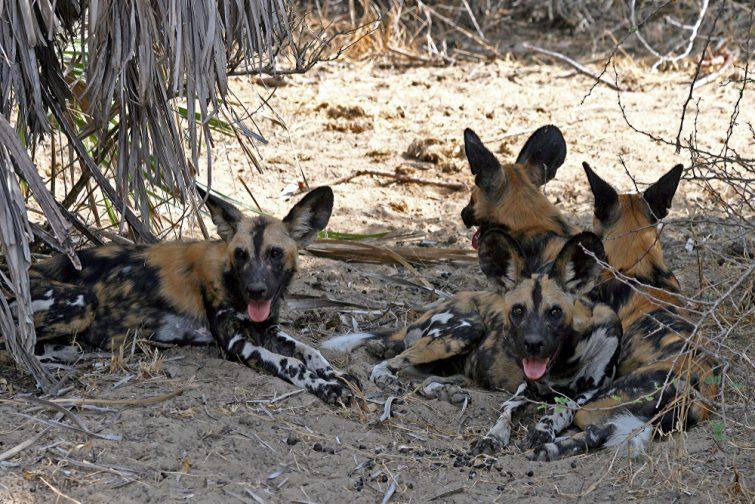 Selous safari en Tanzanie