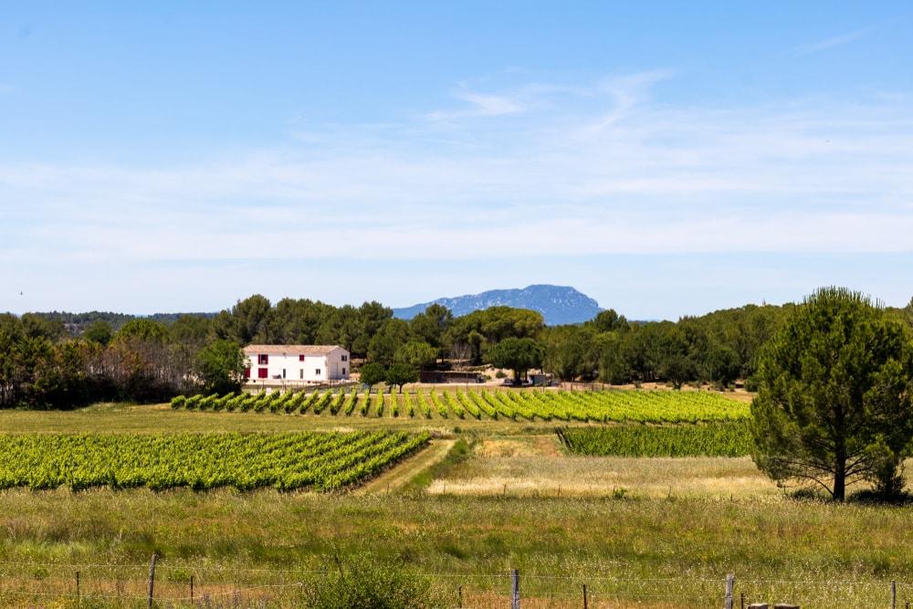 Vineyard of Teyran