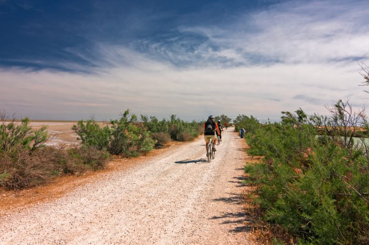 Visiter la Camargue à vélo