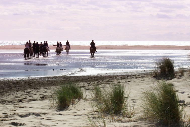 Visiter la Camargue à cheval