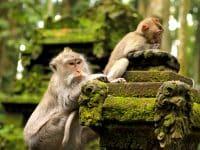 foret des singes bali